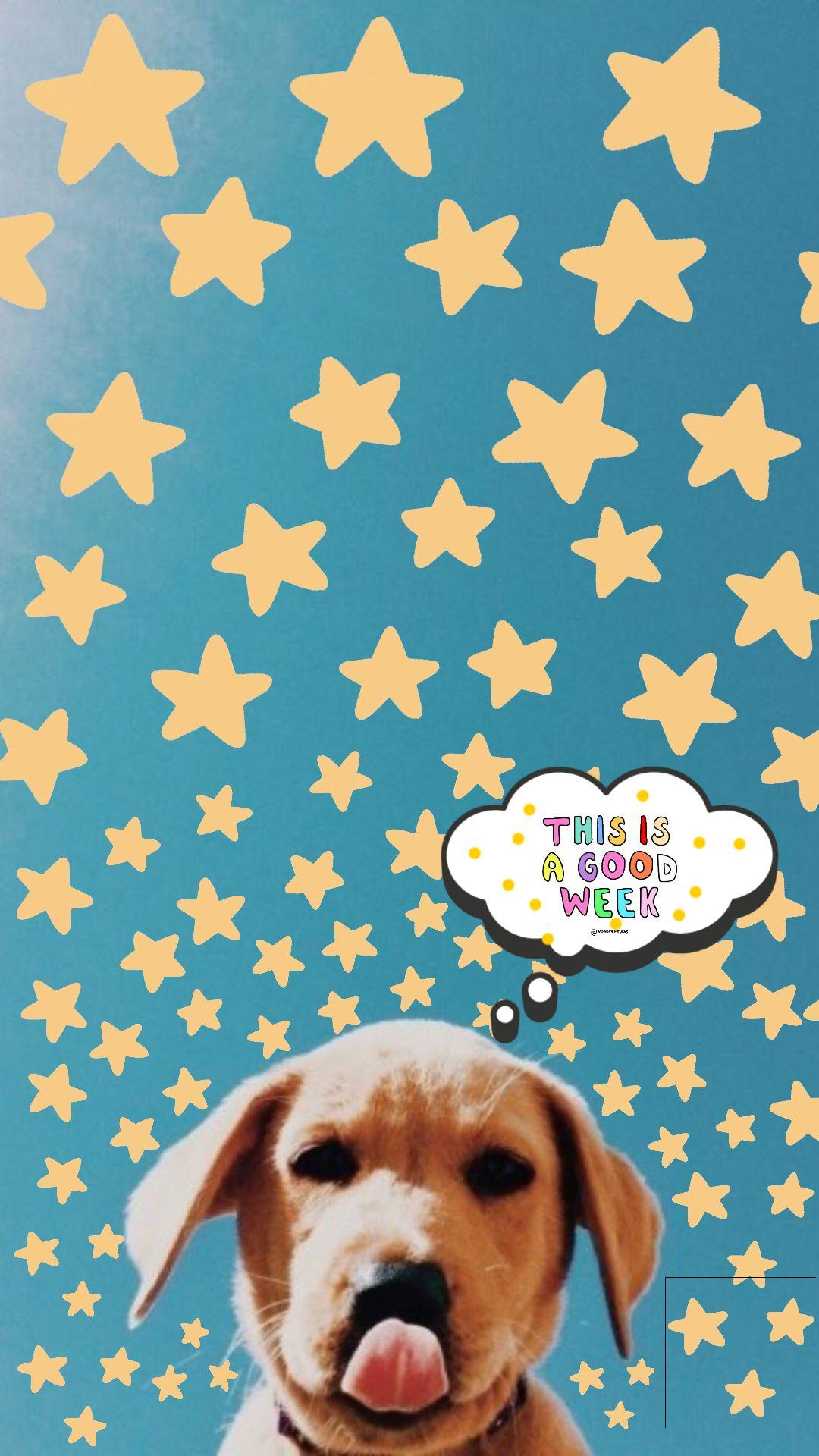 Wallpaper Summer Puppies Puppy Vsco Cute Dog Pictures Puppy Wallpaper Cute Puppies Golden Retriever