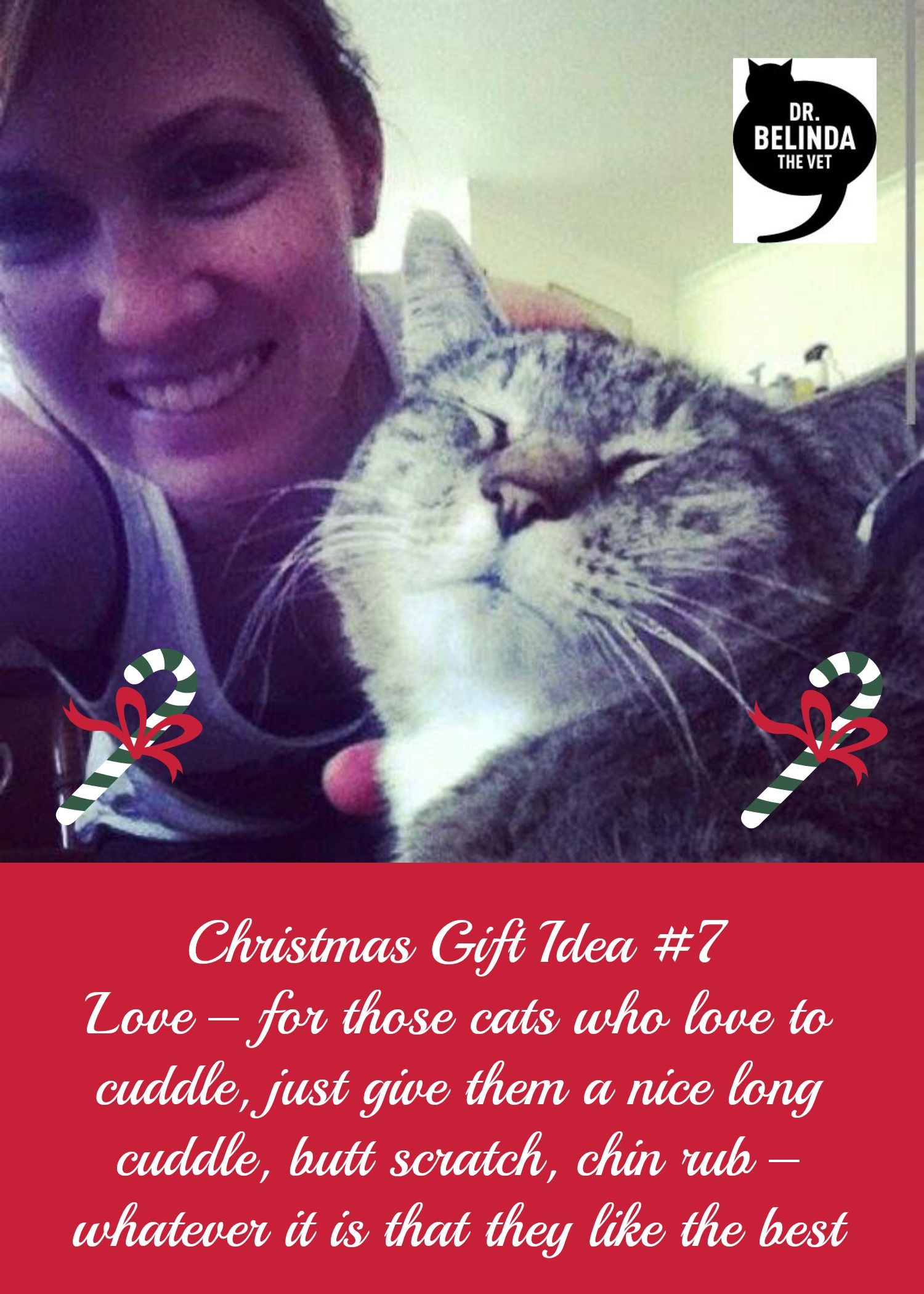12 Christmas Gift Ideas For Your Cat Dr Belinda The Vet Christmas Gifts Cats Cat Gifts