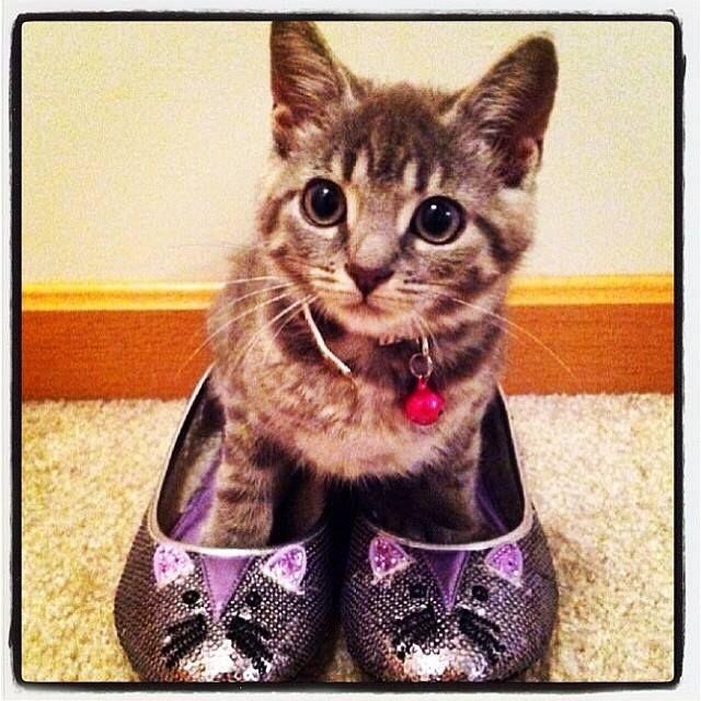 5154fc8a7f939 Cat wearing cat shoes! | Cute Cats | Cats, Cat shoes, Cute cats
