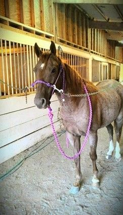 Red Roan Quarter Horse For Sale Quarter Horse For Sale In Weyauwega