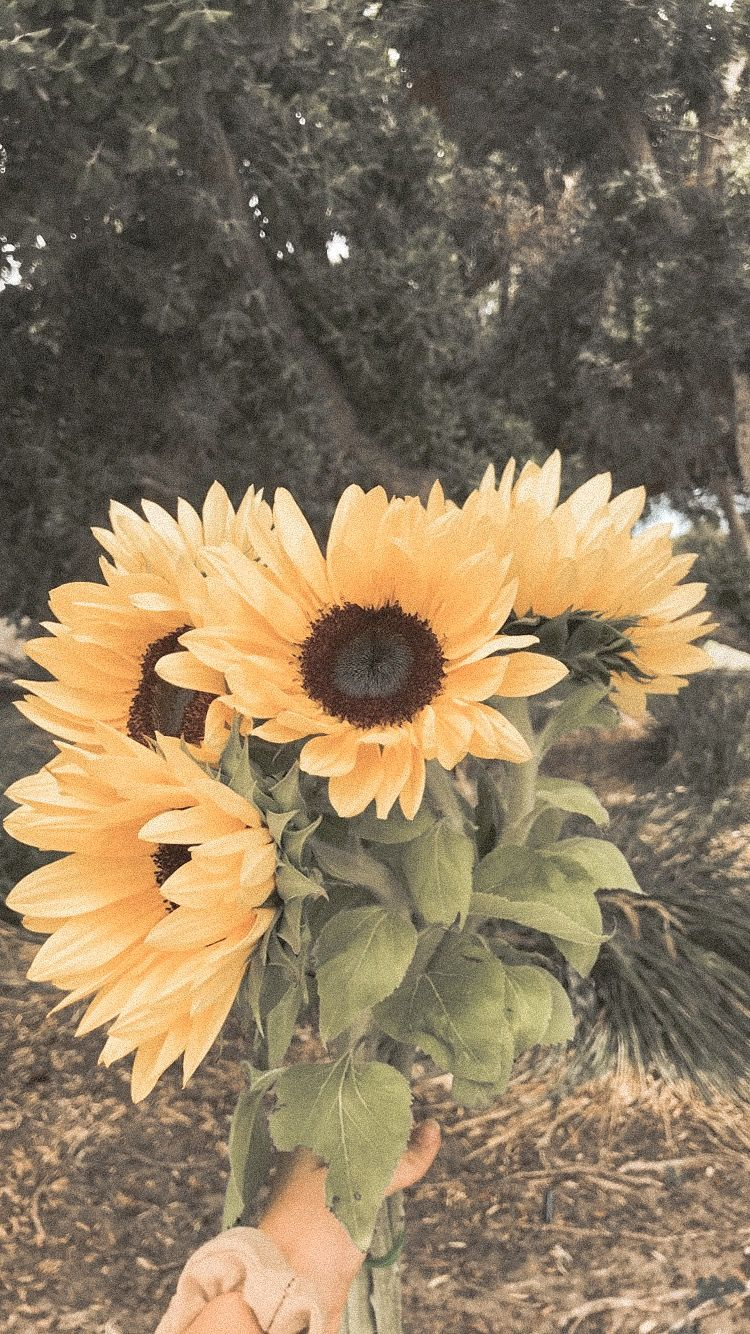 Aesthetic Vintage Sunflower Background