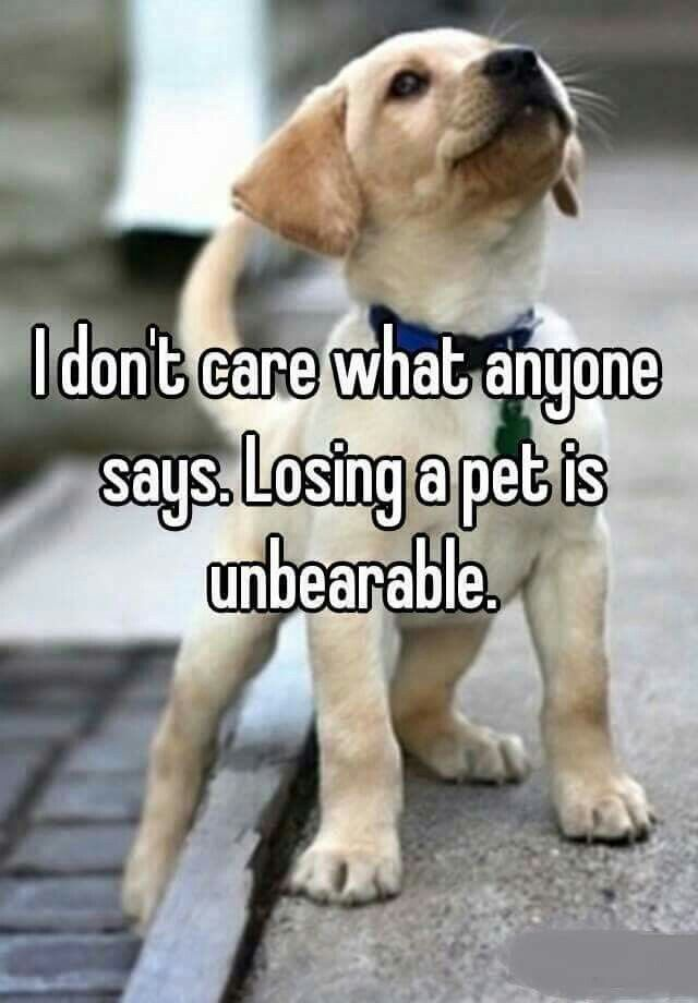 Dog Death Quotes Image Result For Dogs Death Quotes  Doggie Quotes  Pinterest  Dog .