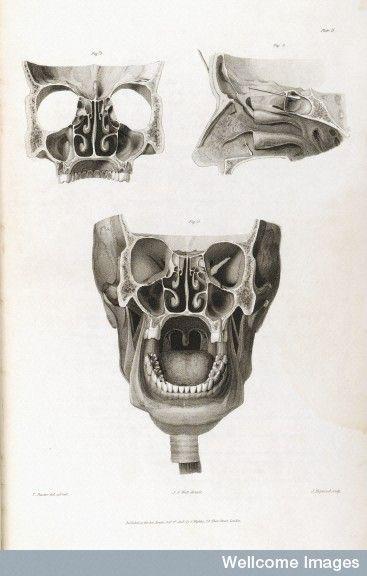 Diagram Of The Skull J J Watts 1809 Embodied Pinterest
