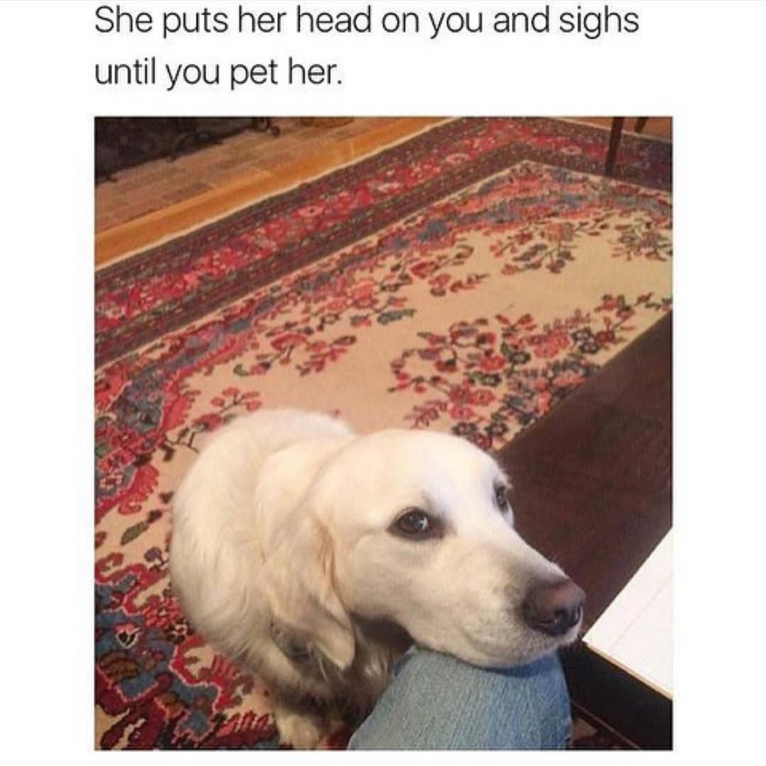 Funny Pictures 2020 Try Not To Laugh Animals Dogs And Puppies
