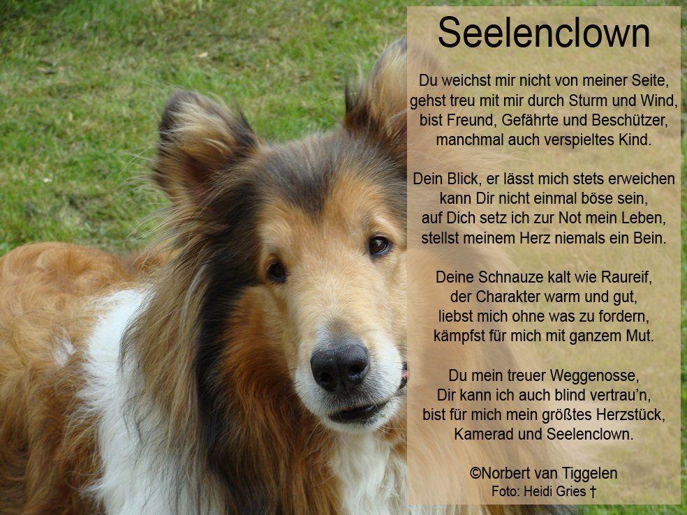 Van Tiggelen Gedichte Menschen Leben Weisheit Welt Erde Gesellschaft Gefuhle Grusse Hund Spruche Tierliebe Hunde Hunde Bilder