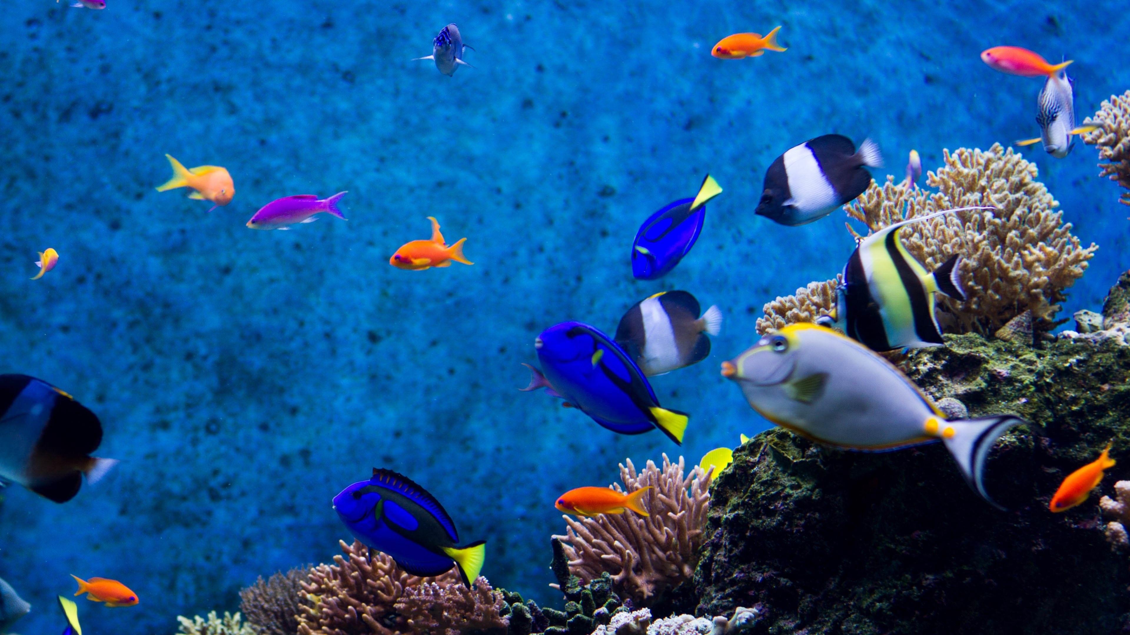 55 Moving Aquarium Wallpapers On Wallpaperplay Aquarium Live Wallpaper Aquarium Screensaver Wallpaper Windows 10