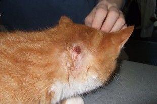 Pets Care Training Dogs Food Etc Cat Skin Pet Care Your Pet