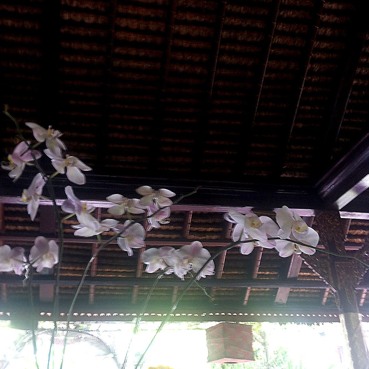 ceiling detail of our favourite cafe in Ubud. the lantern, the orchids, the light … and the best fresh juices and fish and chips on the planet (so far).