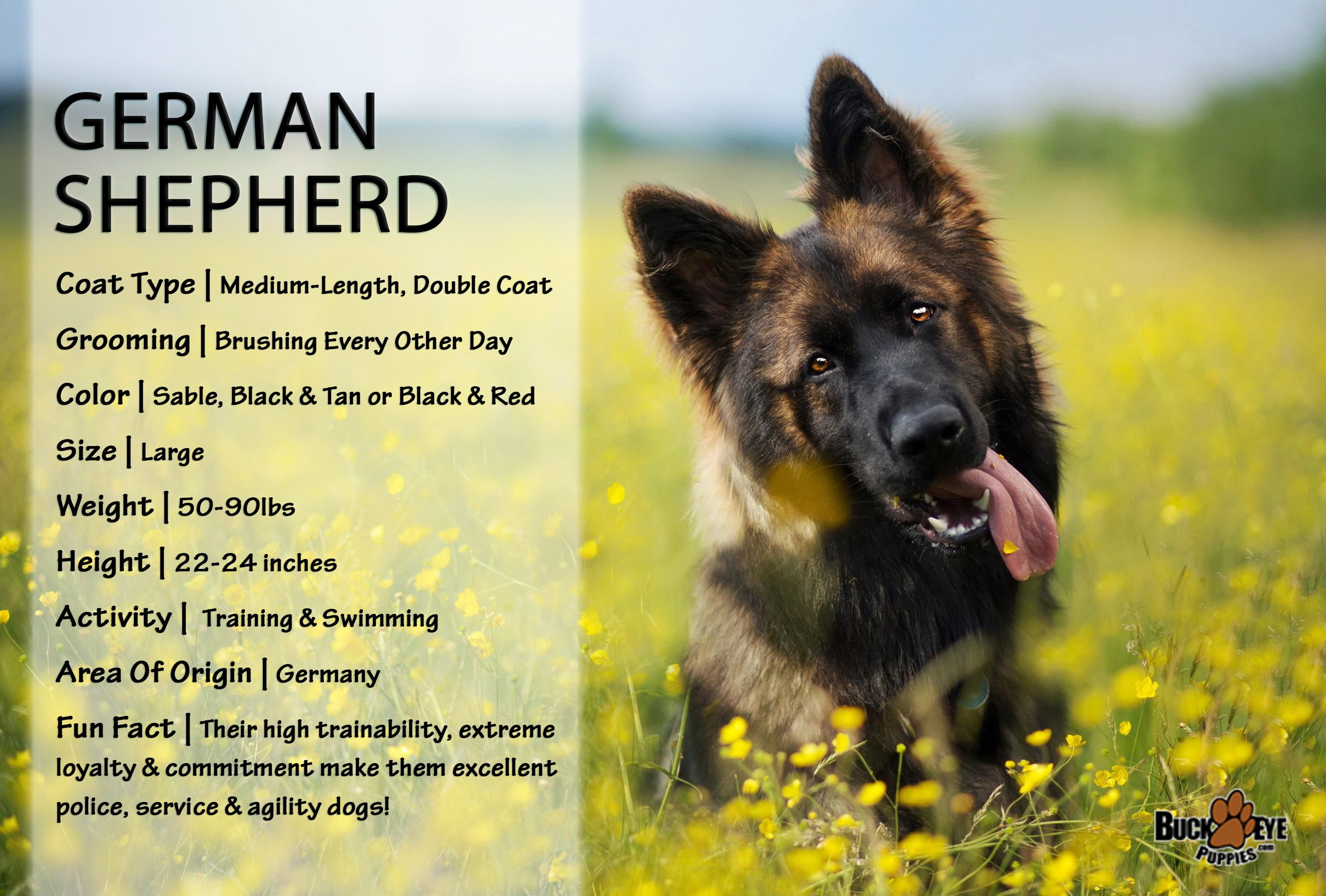 Puppies For Sale German Shepherd Facts Puppies Service Dogs