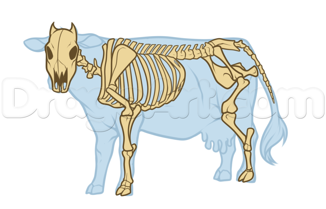 Beautiful Anatomy Of A Hog Gallery - Anatomy and Physiology Tissue ...