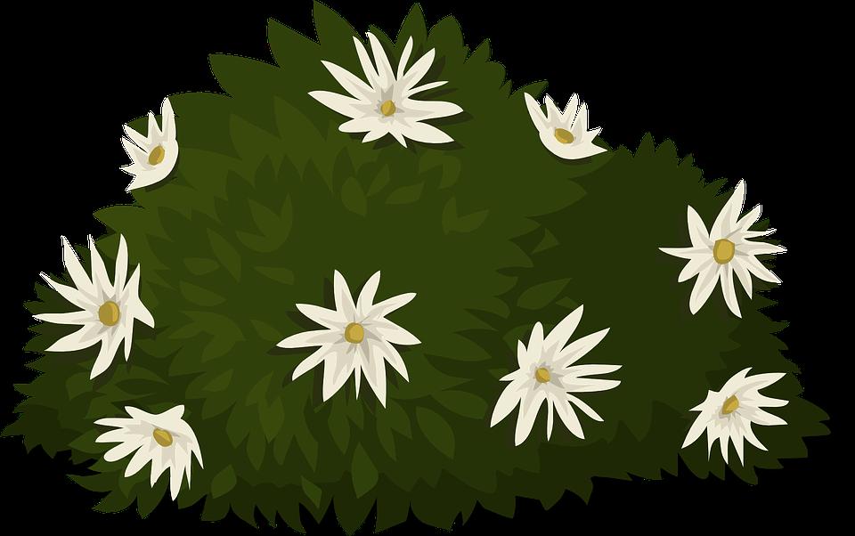 Hvid, Blomster, Planter, Pyntegrønt, Blade, Grønne