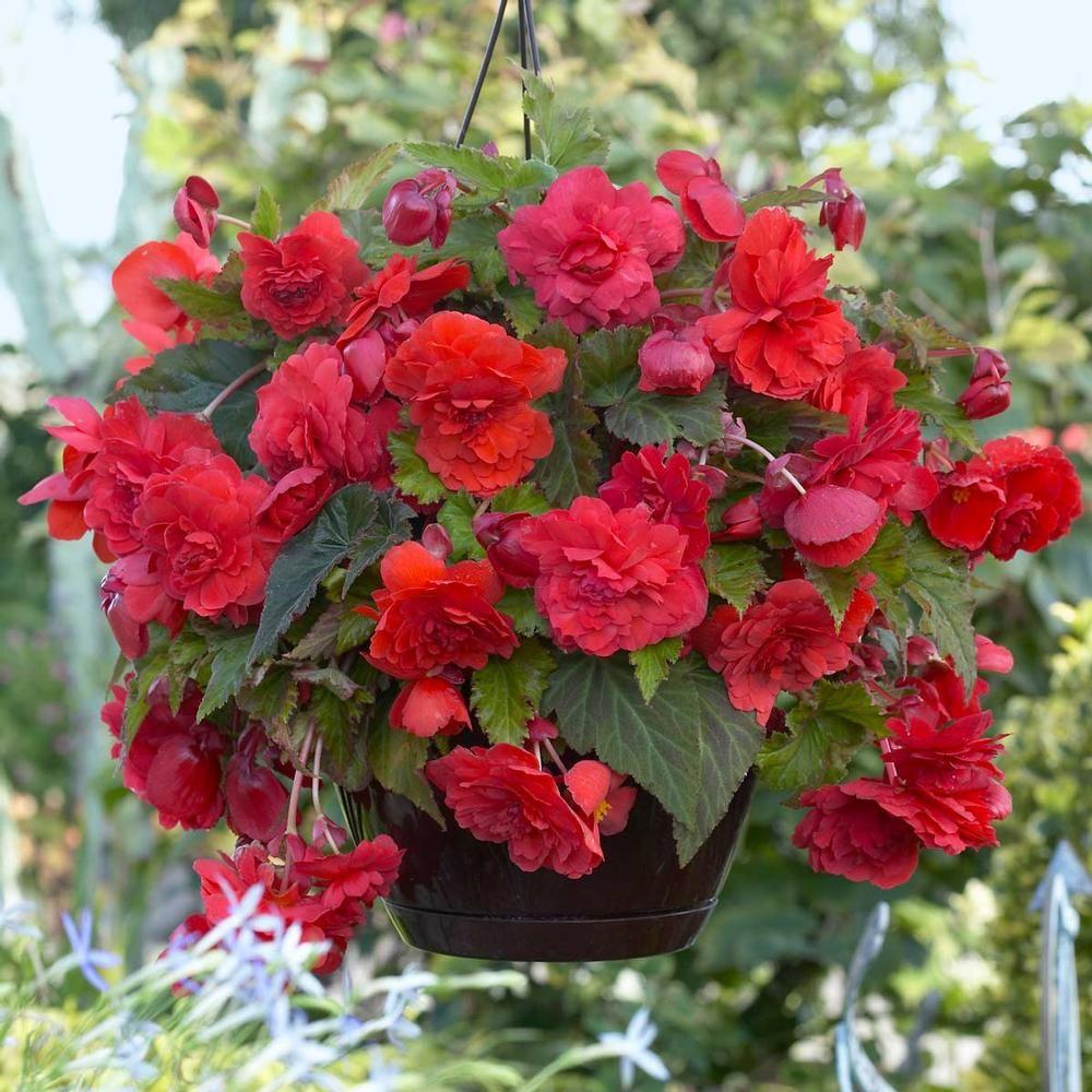Pin On Flower Gardens