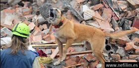 Pueden los animales predecir los terremotos? Científicos dicen que si