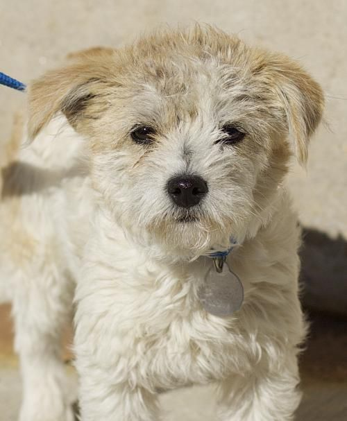 Adopt Vidalia On Terrier Mix Dogs Dogs Terrier Mix