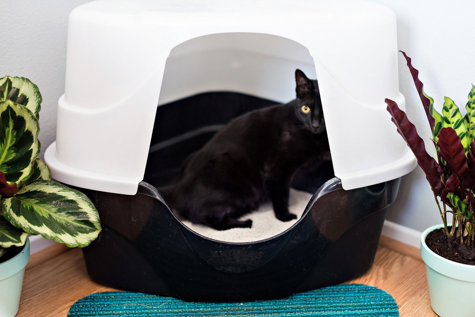 5 ways to keep a litter box smelling fresh and odorless