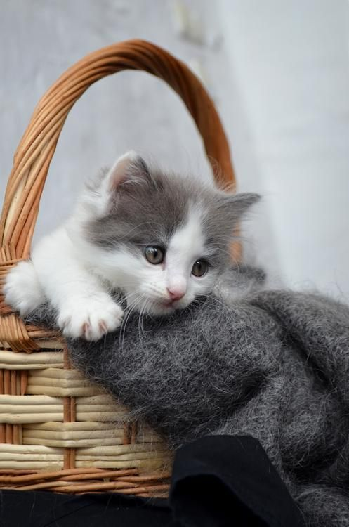 magicalnaturetour:     Photo by Svetlana ~ Sweet Dreams beautiful friends ♥