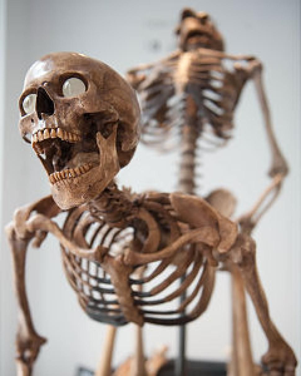 skeletons in sexual positions put on display | nyc, the o'jays and, Skeleton