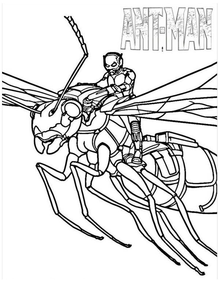 Antman And The Wasp Coloring Pages Everyday We Must Have Met This One Small Animal Yes Spider Coloring Page Avengers Coloring Pages Coloring Pages To Print