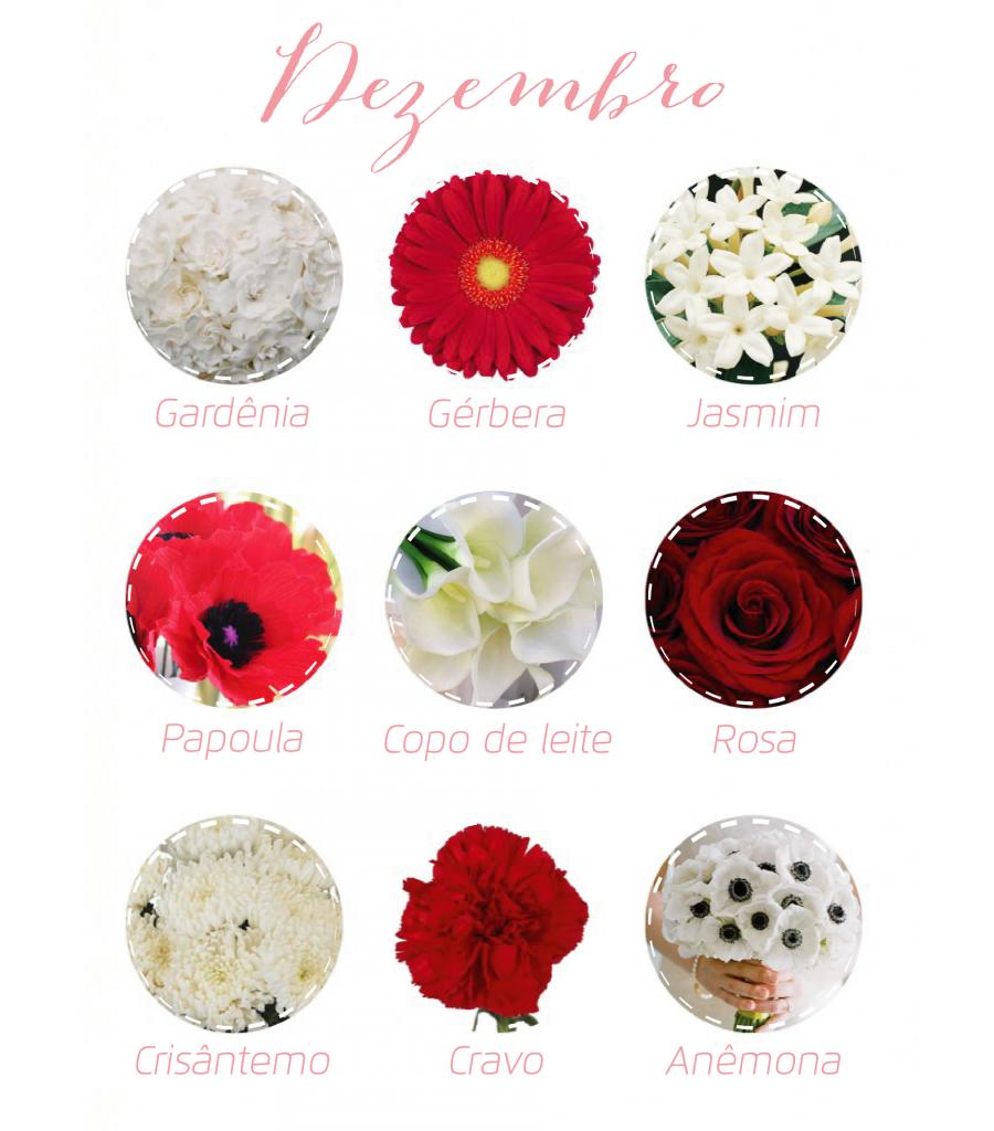 Flores da Estação - Dezembro | Flowers | Pinterest | Flowers