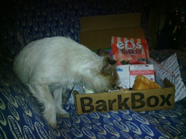 Barkbox post of Bandit Moe Moe