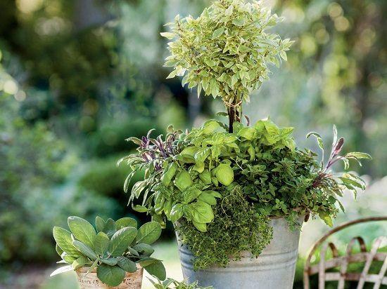 33 beste Behälter-Kräutergarten-Kombinationen für Aroma u. Aroma | Balkon Garten W ...   - GARDEN CONTAINER INDOOR -