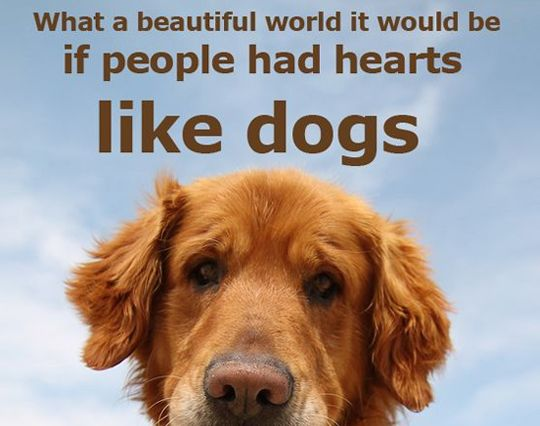Quotes About Dogs 33 Inspirational Dog Quotes  Pinterest  Dog People And Animal