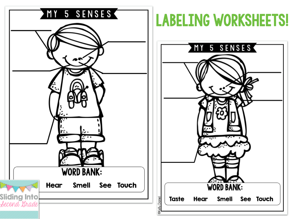 Updated 5 Senses Packet Easy To Read Labeling Worksheets