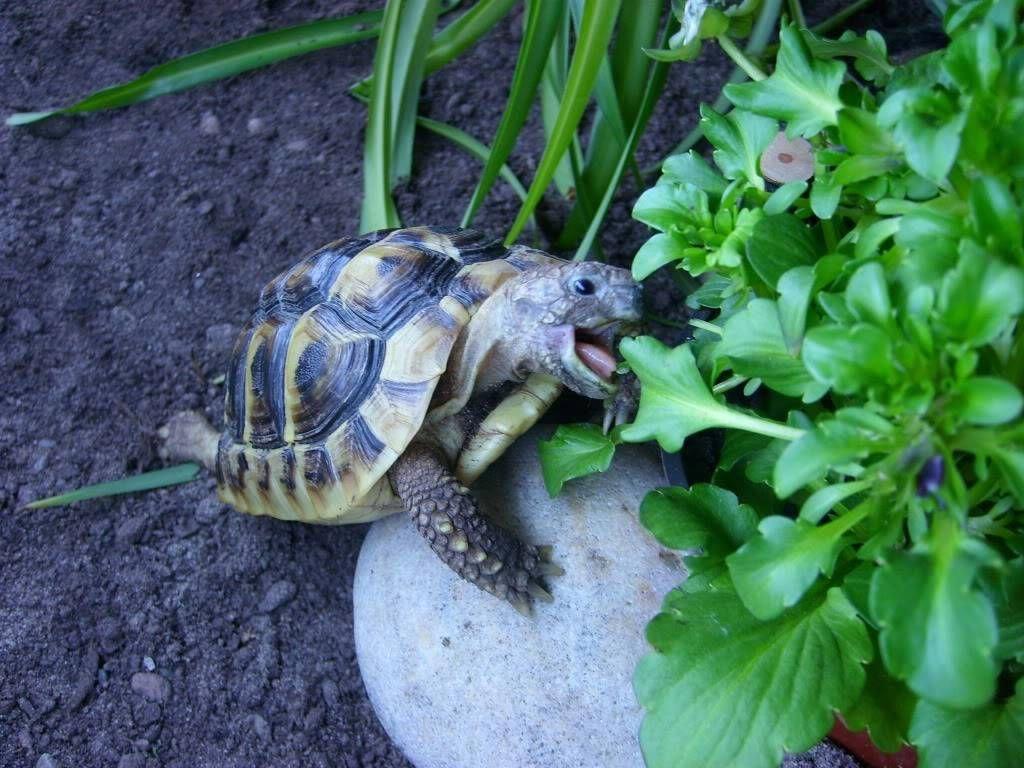 Esme hermans new home indoor enclosures tortoise