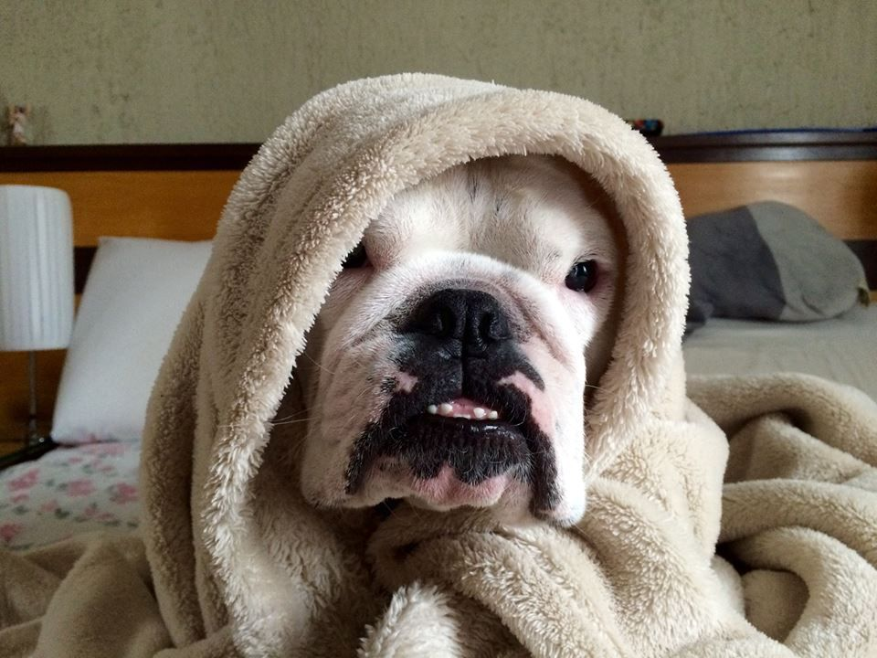 """❤ """"It's so early MOM - can't we sleep in today?"""" ❤ Posted on Baggy Bulldog"""