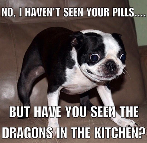 Pin By Ted Tarrant On Comical Laughable Funny Animal Jokes Funny Dog Memes Funny Animal Quotes
