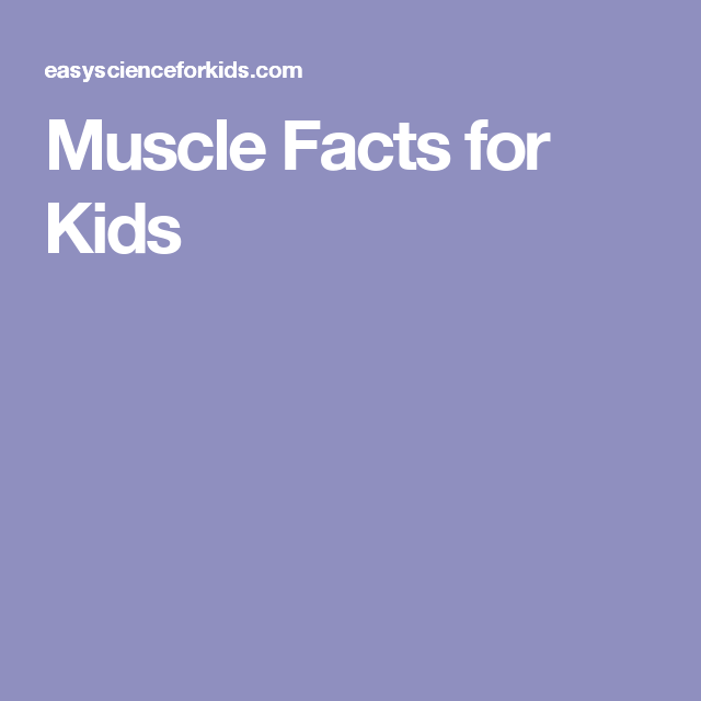 muscle facts for kids | science camp | pinterest | muscles, human, Muscles