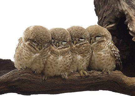 Cozy foursome.