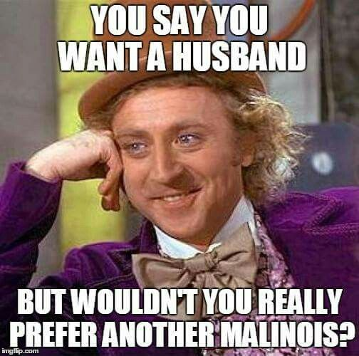 Malinois funny