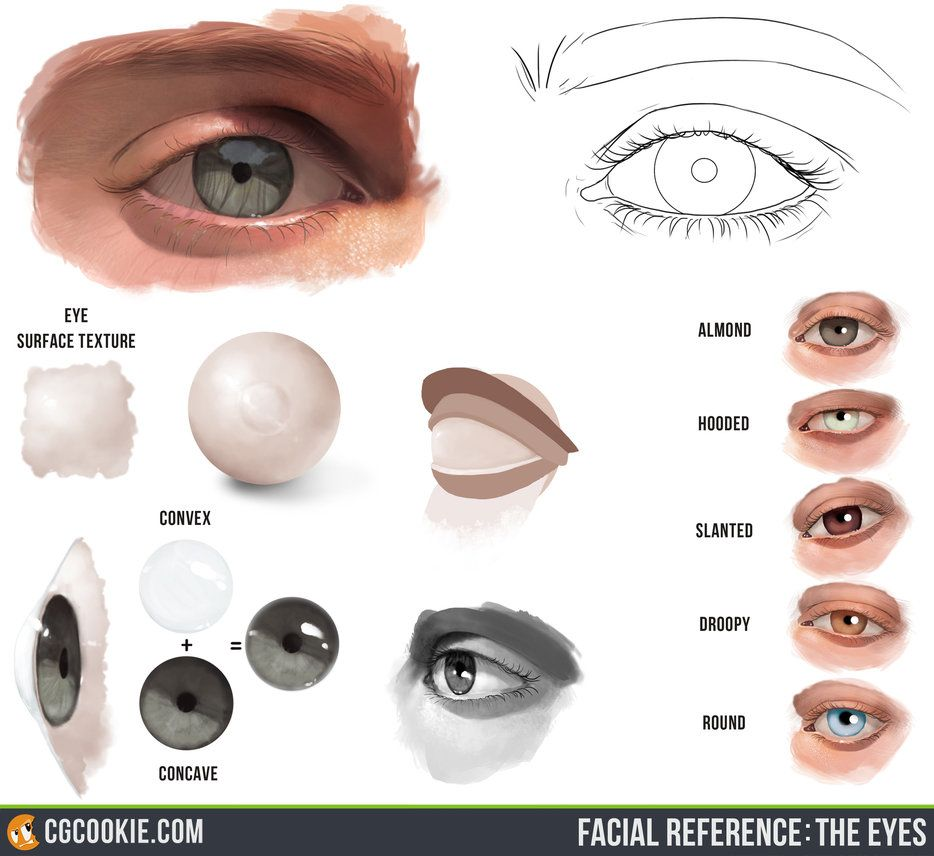Check Out And Download The Eyes Reference Hereartist Tim Von Rueden