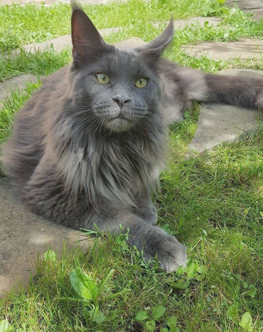 Brilliant Beautiful Cats For Sale In Pakistan Cute Cats Beautiful Cats Pretty Cats