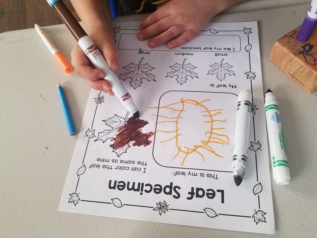 Free Preschool Leaf Specimen Printable To Compliment Your