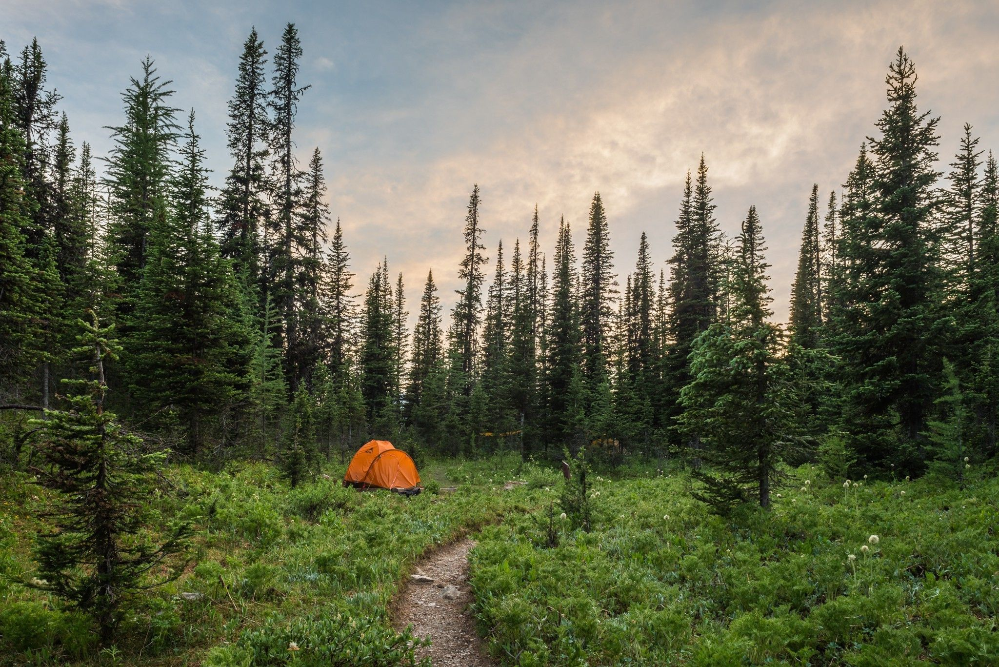 Landscape Plants Trees Camping Green Nature Tents Path Wallpaper