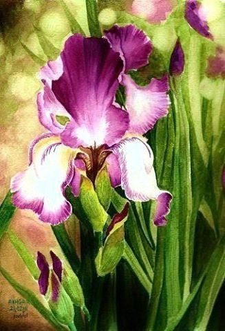 Watercolor Iris Iris Painting Floral Watercolor Garden