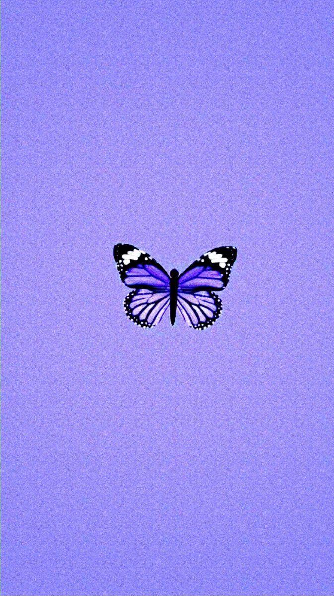 Purple butterfly | Papel de parede lilás, Papel de parede ...