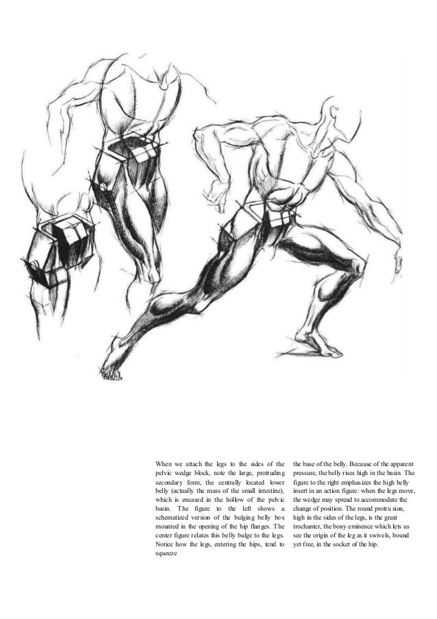 TORSO--- Dynamic Figure Drawing by Burne Hogarth, pg.46 | The ...