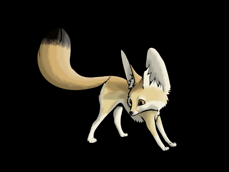 Animals For Fennec Fox Drawing Fox Drawing Fennec Fox Drawings