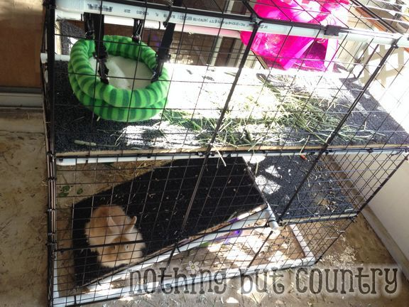 Diy rabbit bunny cage for cheap using closemaid for How to make a cheap guinea pig cage