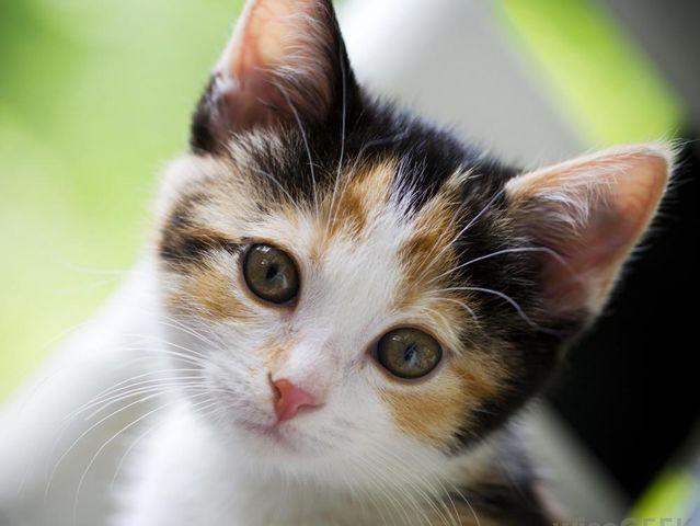 I got: Leader/Medicine Cat! What Warrior Cat Rank Do You Have?