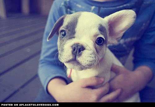 cute-puppy-ears