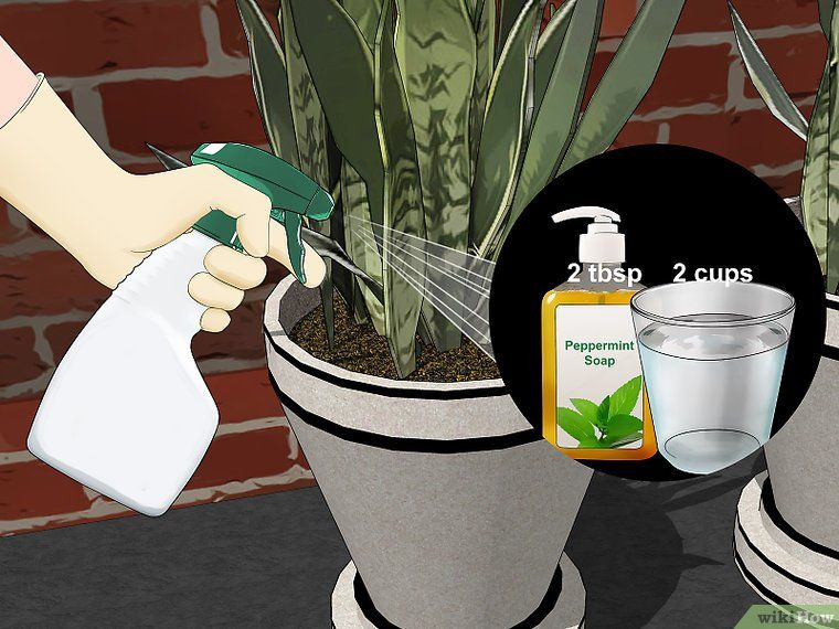 4 Ways to Remove Ants from Potted Plants - wikiHow