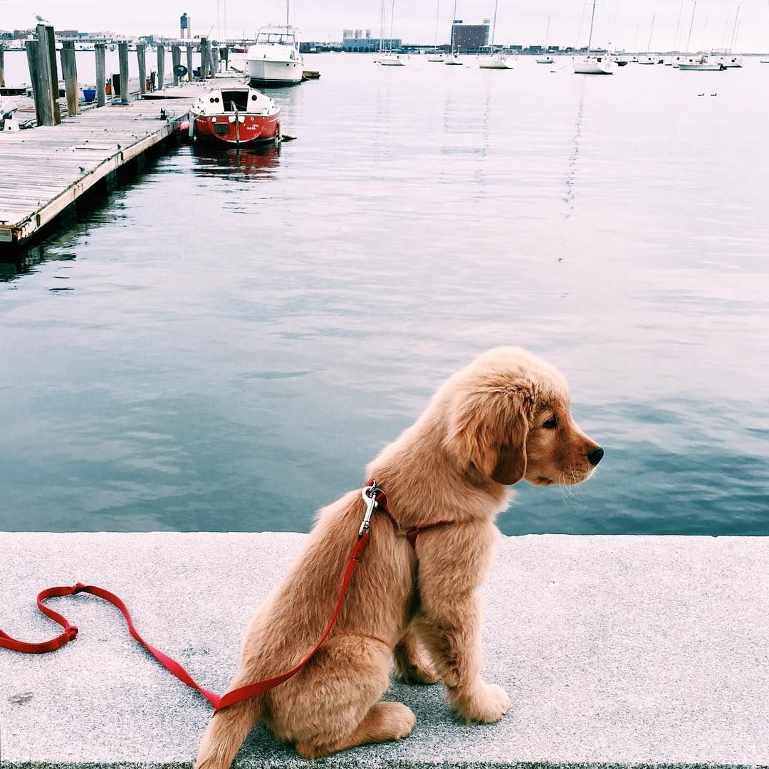 Pin by gab on animals pinterest boston harbor animal and running