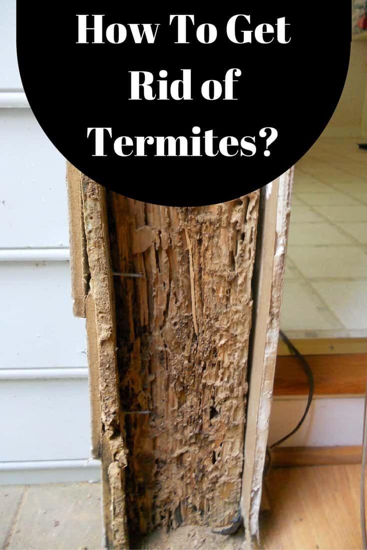 How to get rid of termites termites termite control