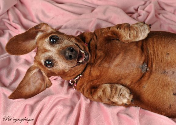 Heidi A Lovely Senior Doxie Is Looking For Her Forever Home