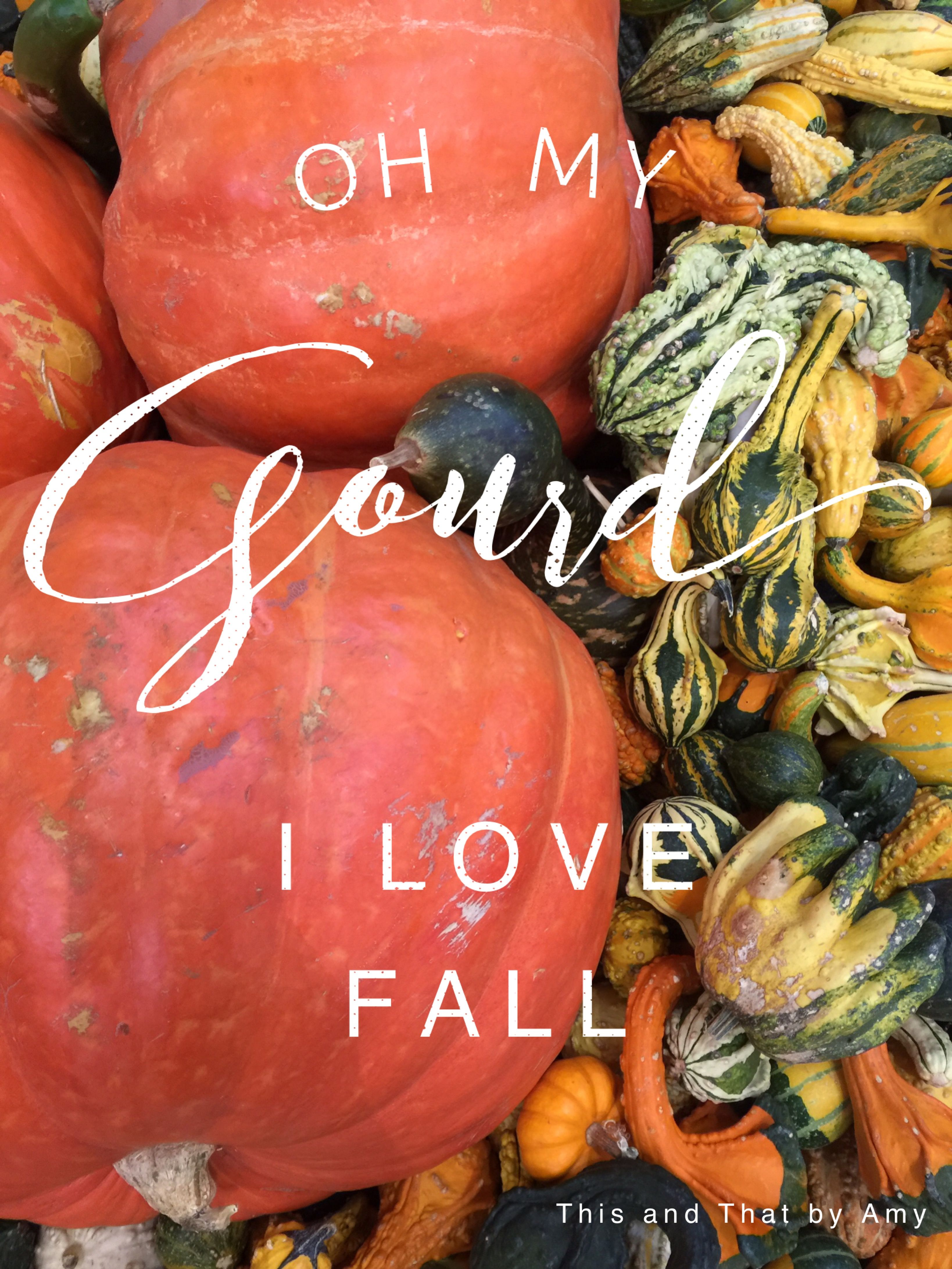 Oh My Gourd With Images Holiday Decorations Fall Fall Fun