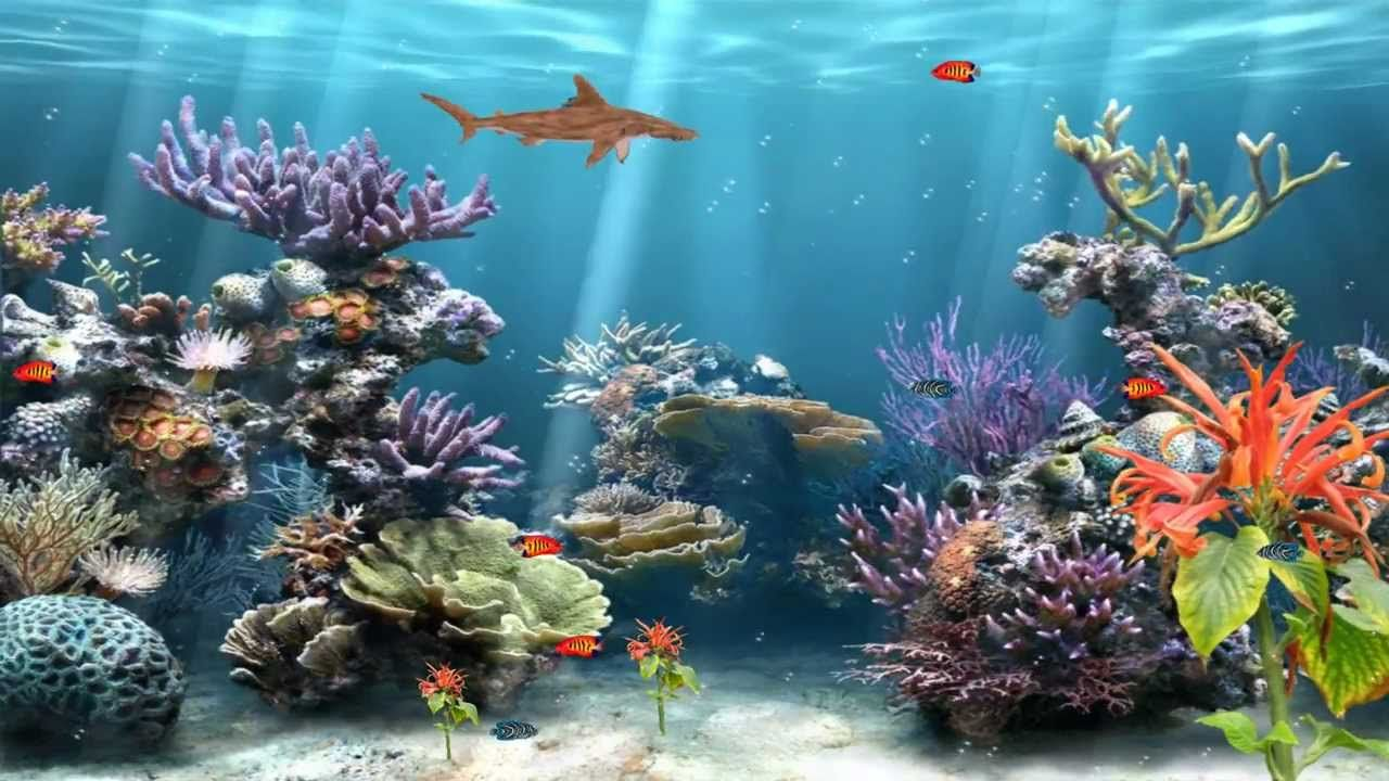 Coral Reef Aquarium Animated Wallpaper Http Www Desktopanimated Aquarium Backgrounds Anime Wallpaper Coral Reef